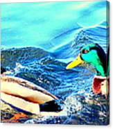 Some Ducks Are Just Happily Swimming With Their Team  Canvas Print