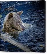 Black Bear On Blue Canvas Print