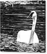 Swimming Beauty Canvas Print