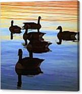 Swimming Geese Canvas Print