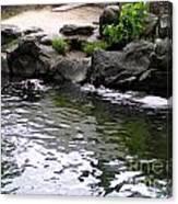 Swimming Hippo Canvas Print