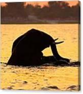Swimming Kalahari Elephants Canvas Print