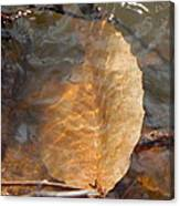 Swimming Leaf Canvas Print