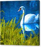 Swimming Swan And Ferns Canvas Print