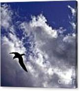 Swimming Through The Sky Canvas Print