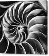 Swirl IIi Canvas Print