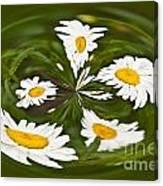 Swirl Of Daisies Canvas Print