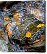 Swirling Stream Of Leaves  Canvas Print
