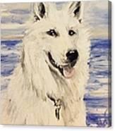 Swiss Shepherd Canvas Print