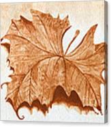 Sycamore #1 Oklahoma Red Dirt Artwork Tm Canvas Print