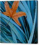 Sycamore Leaf And Sotol Plant Canvas Print