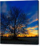 Sycamore Sunset Canvas Print