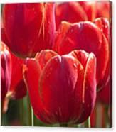 Symbolic Tulips Canvas Print