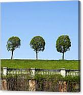 Symmetric Trees Over Old Fence Canvas Print