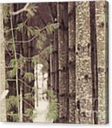 Symmetrical Evergreens  Canvas Print