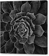 Symmetrical Succulent Canvas Print