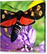 Symphony Of Colors Canvas Print
