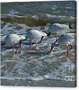 Synchronized Beach Combing Canvas Print