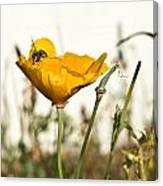 Syrphid Fly And Poppy 2 Canvas Print