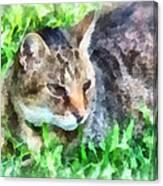 Tabby Cat Closeup Canvas Print