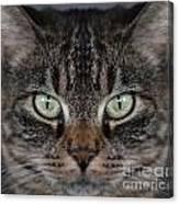 Tabby Cat Face Canvas Print