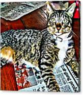 Tabby Cat On Newspaper - Catching Up On The News Canvas Print