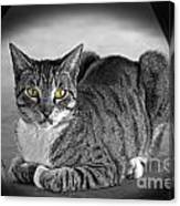 Tabby Cat Canvas Print