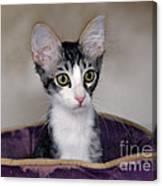 Tabby Kitten In A Purple Bed Canvas Print