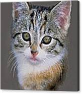 Tabby  Kitten An Original Painting For Sale Canvas Print