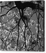 Tabebuia Tree 1 Canvas Print