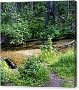 Tacoma Creek 1 Canvas Print