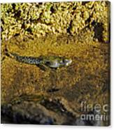 Tadpole Tail Canvas Print