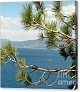 Tahoe Through The Pines Canvas Print
