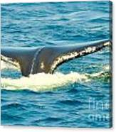 Tail From The Deep Canvas Print