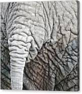Tail Of African Elephant Canvas Print