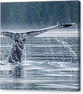 Tail Of Humpback Whale Canvas Print