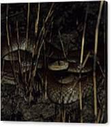 Taipan Canvas Print