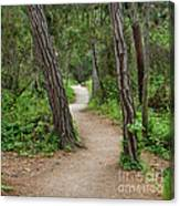 Take A Hike Canvas Print