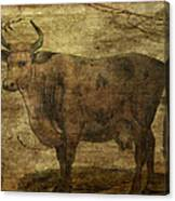 Take The Cow By The Horns Canvas Print
