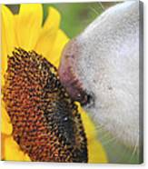 Take Time To Smell The Sunflowers Canvas Print