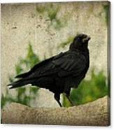 Blackbird Is Taking It All In Canvas Print