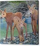 Talkeetna River Trio Canvas Print