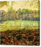 Chillin Cows Canvas Print