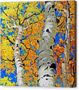 Tall Aspen Trees Canvas Print