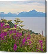 Tall Fireweed And Cow Parsnip Over Cook Inlet Near Homer- Ak Canvas Print