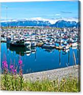Tall Fireweed By The Marina Along Homer Spit-ak  Canvas Print