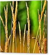 Tall Grain Canvas Print