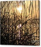 Tall Grass 1 Canvas Print