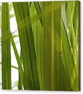 Tall Grass Canvas Print