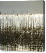 Tall Grass On Lough Eske - Donegal Ireland Canvas Print